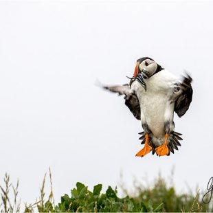 Wildlife Photography Farne Islands
